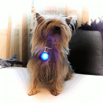 Medallon de luz LED para mascotas