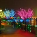 Lighting LED trees